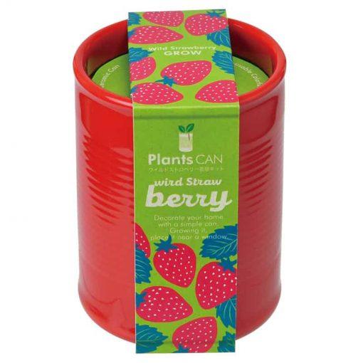 Strawberry-grow-pot-teacher-gift