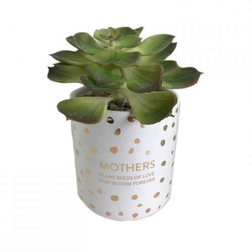 mothers-day-gifts-australia-thoughtful-plants
